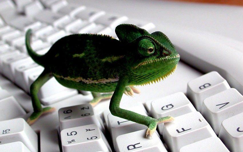хамелеон в интернет маркетинге